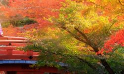 טיול מאורגן ליפן בשלכת